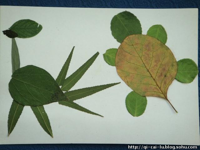 各种树叶的介绍