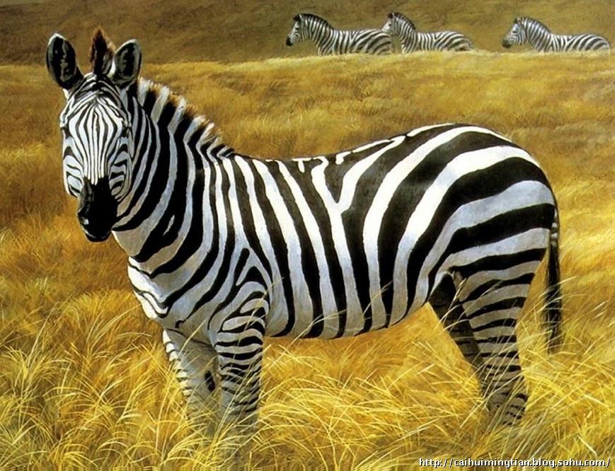 黑白动物渐变构成设计