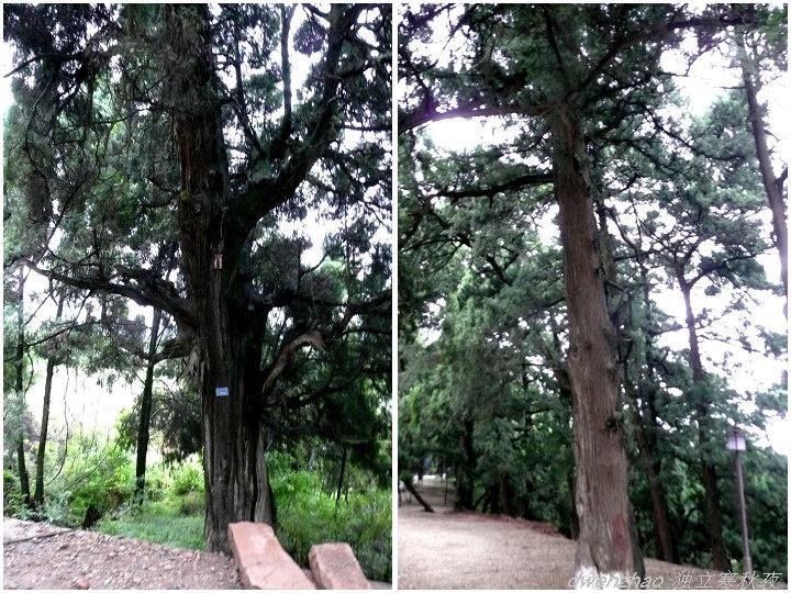 柏树生长慢,长那么粗需要数百年甚至更久.
