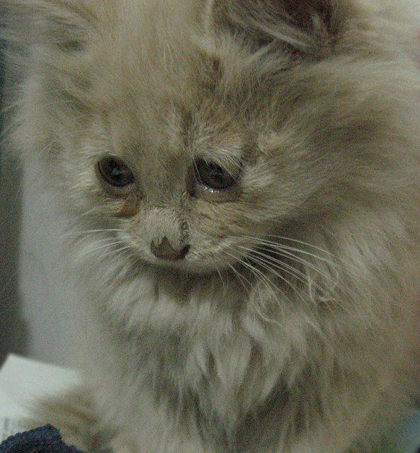 壁纸 动物 猫 猫咪 小猫 桌面 593_640