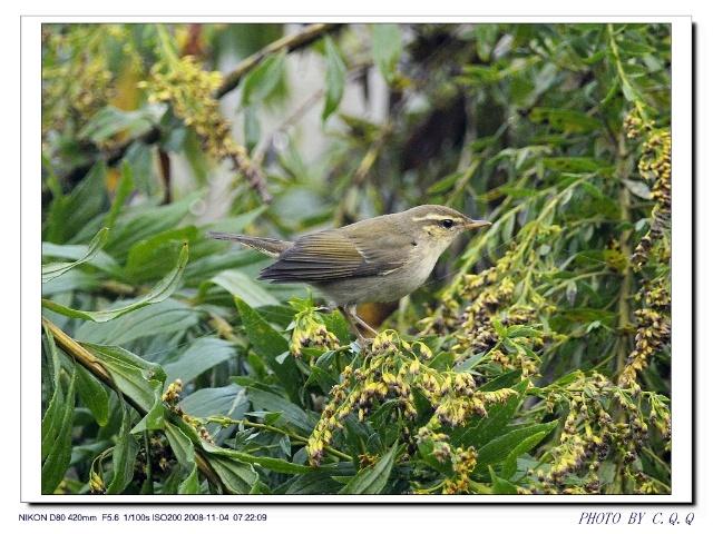 壁纸 动物 鸟 鸟类 雀 640_480