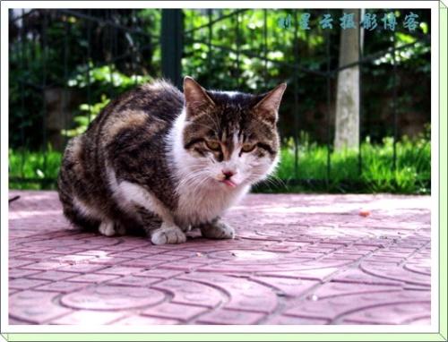 要嘴吃的流浪猫(可爱的动物115) - 宠物乐园--喜爱