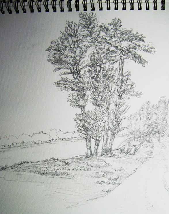 树木太阳素描图