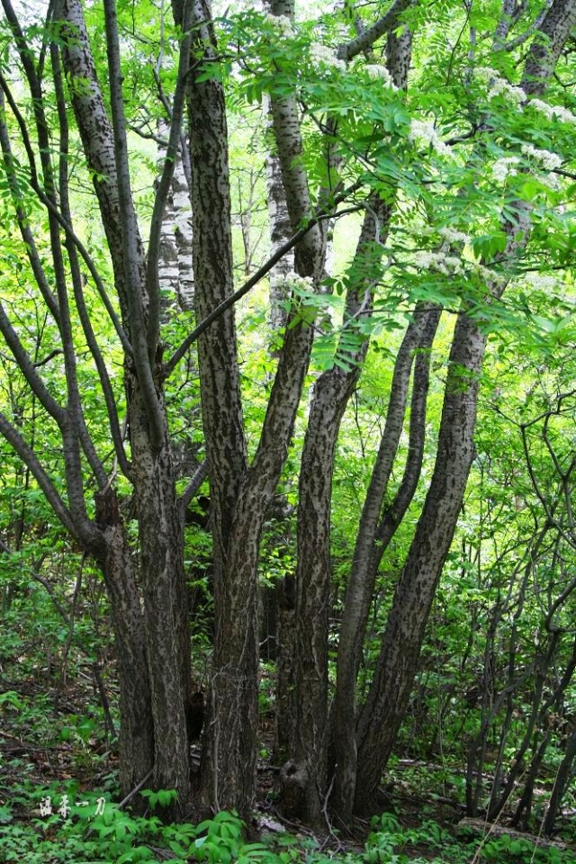 走就走了,树杈认识一条不用走盘山路的小路,虽然也是艰苦,但也没办法