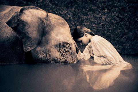 人与动物电影网址_人与动物的感性影像--格雷戈利·考伯特