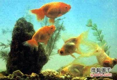 壁纸 动物 海底 海底世界 海洋馆 水族馆 鱼 鱼类 400_273