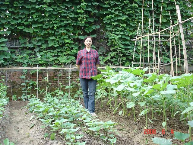绿茄子的生长过程(37)            胡萝卜的生长过程