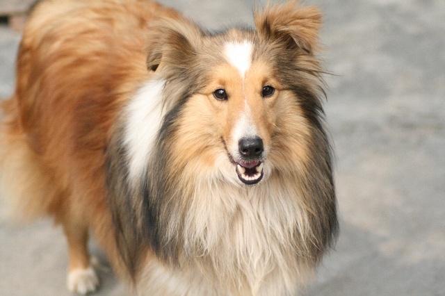 狗狗流浪日记——救助流浪的小狗