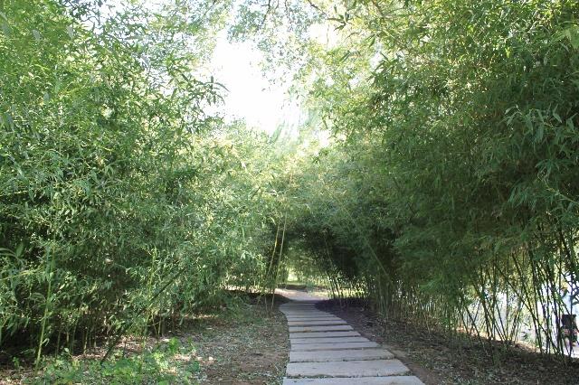 紫竹院公园植物配置立面图