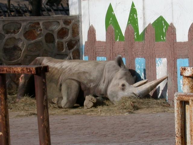 天津动物园-西雅图不眠夜-搜狐博客