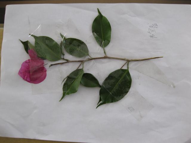三年级科学小制作树叶
