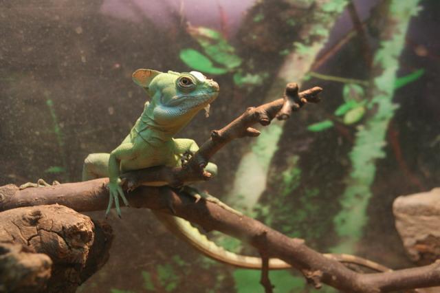 壁纸 动物 两栖 蛙 640_426