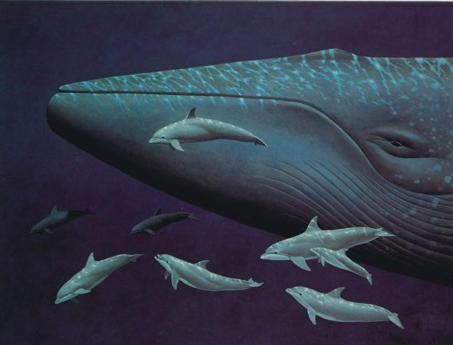 大家好,我是一只可爱的蓝鲸,我在鲸类中体型最大的鲸鱼。目前,我只有不到五十个兄弟姐妹,接下来,我要向大家做个自我介绍。 我们比大象更大,我见过最重的同伴有十六万公斤呢,最轻的有两千公斤。若我张开嘴,人们跳起来也摸不到我的上腭。 很多人叫我们鱼。