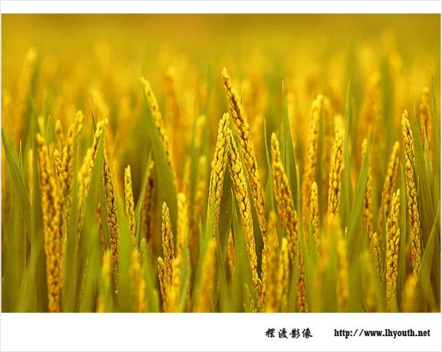 秋天丰收景象的图画图片展示_秋天丰收景象的图画相关图片下载