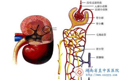 原理,利用透膜两侧的血液和透析液质的浓度梯度