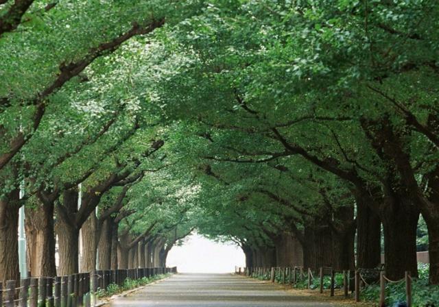 令人惊艳的林荫大道图片