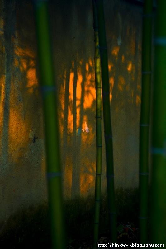 干河竹林 山水5083的博客 我的搜狐 -干河竹林