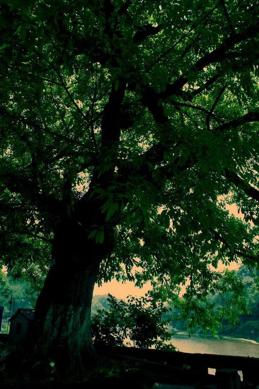 壁纸 风景 森林 桌面 532_800 竖版 竖屏 手机
